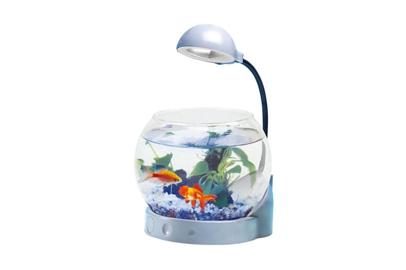 Bes acquariologia beselettronica mini acquario vetro
